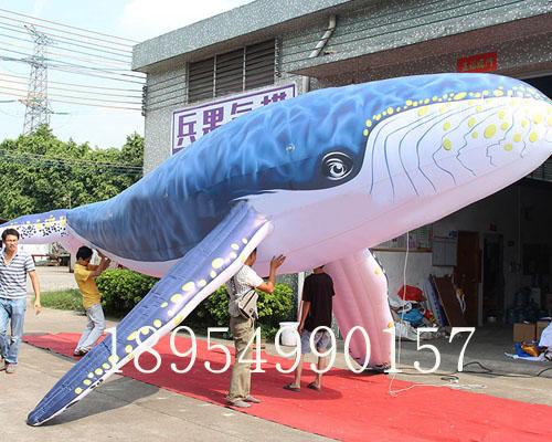 鲨鱼彩绘世界杯开户模型
